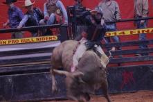 mcelfish_rodeo_11
