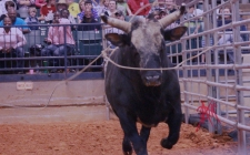 mcelfish_rodeo_29