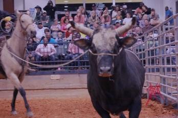 mcelfish_rodeo_30