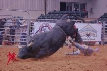 mcelfish_rodeo_40